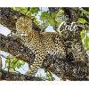 Kalendarz Duże Koty Big Cats 2022 Calendar