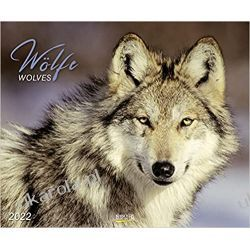 Kalendarz Wolves 2022 Wilki Calendar